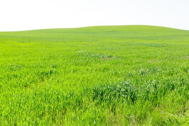 Beau champ vert Photo Premium