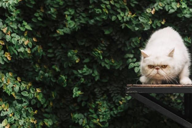 Beau chat blanc dans la nature Photo gratuit