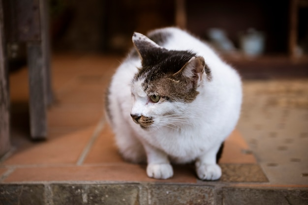 Beau chat blanc Photo Premium