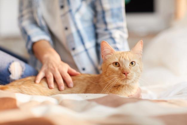 Beau Chat Roux à La Maison Photo Premium