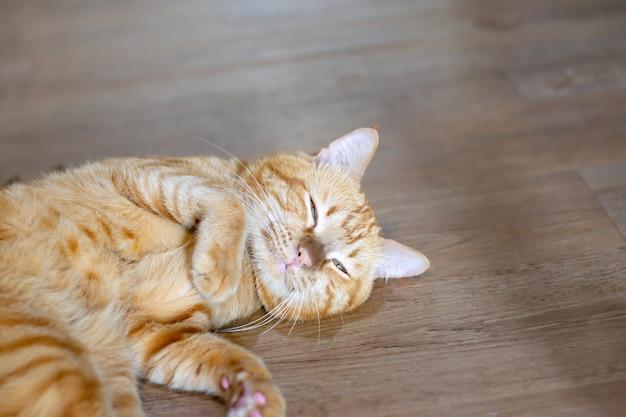 Beau chat sous beaucoup sentir Photo Premium
