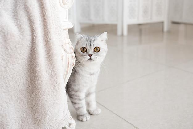 Beau chat tigré gris avec des yeux jaunes se dresse sur le sol blanc Photo gratuit