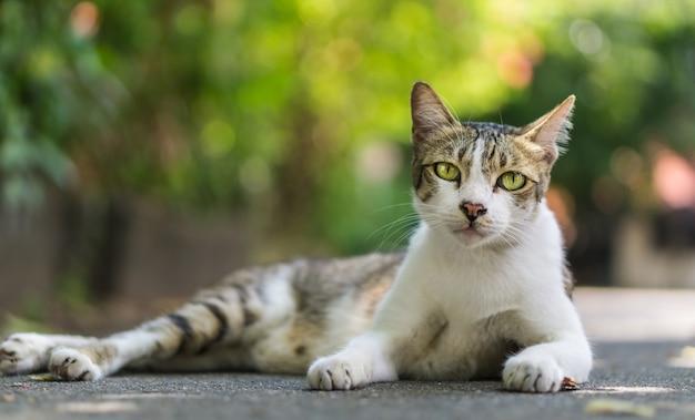 Beau chat trois couleurs Photo Premium