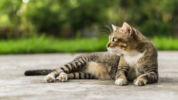 Beau chat Photo Premium