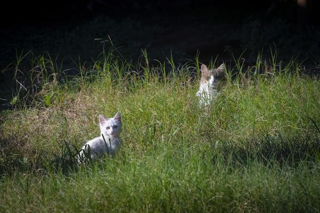 Beau Chaton Blanc Mignon Et Chat Mère Sur L'herbe Verte Photo gratuit