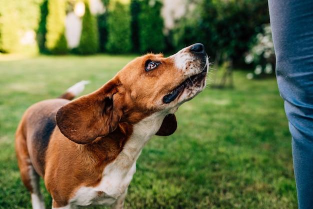 Beau chien attend avec impatience un régal Photo Premium