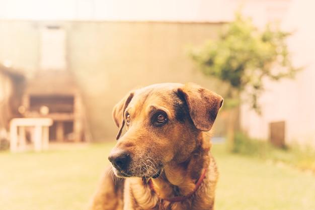 Beau chien posant dans le jardin Photo gratuit