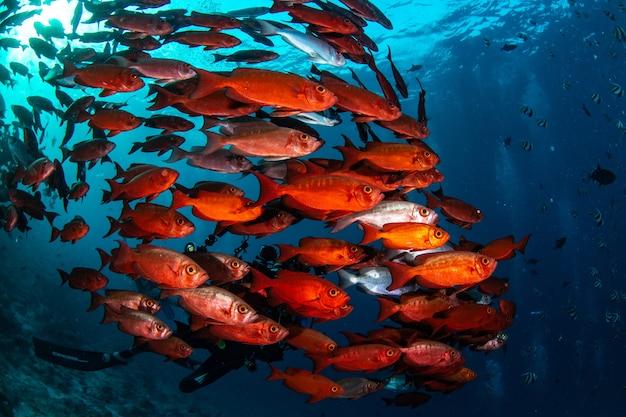 Beau Cliché De La Vie Sous-marine Des Maldives Photo gratuit