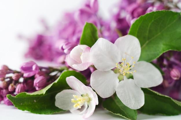 Beau fond d'écran printanier à la floraison abricot et lilas. Photo Premium