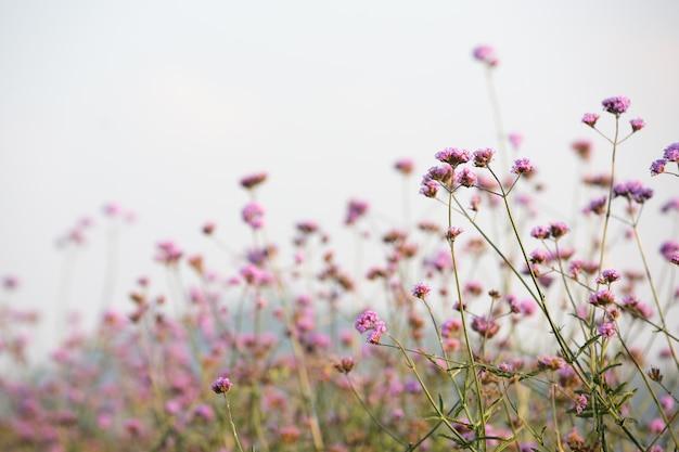 Beau fond de fleur rose. Photo gratuit
