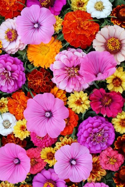 Beau fond floral pour les voeux ou les cartes postales. Photo Premium