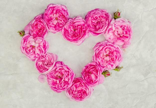 Beau fond avec des roses roses. mise au point sélective. Photo Premium