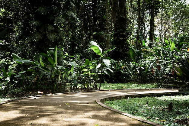 Beau Jardin Tropical Long Shot Photo Premium