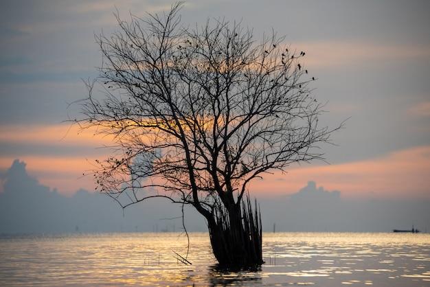 Beau lever de soleil sur un lac avec un arbre Photo Premium