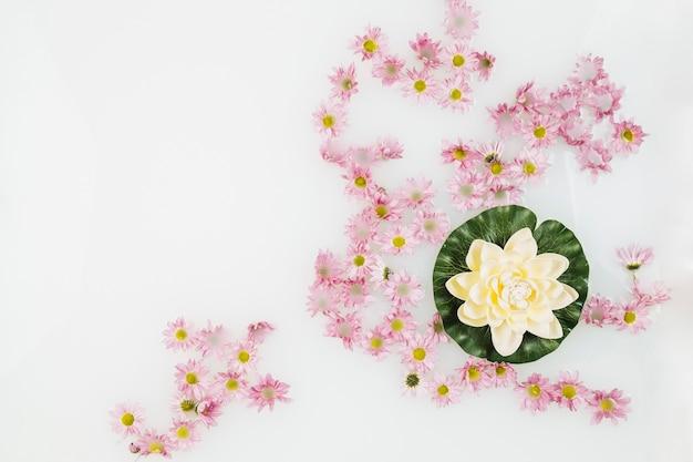 Beau lotus et fleurs roses dans un bain à remous avec du lait Photo gratuit