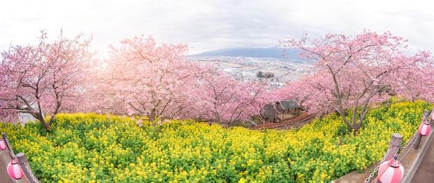 Beau panoramique de fleur de cerisier à matsuda, japon Photo Premium