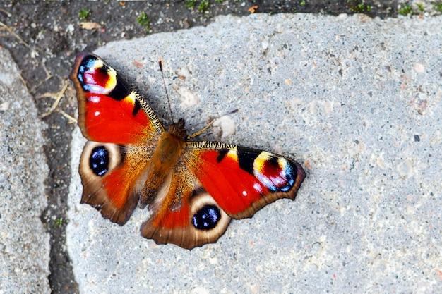 Beau papillon assis sur le sol Photo Premium