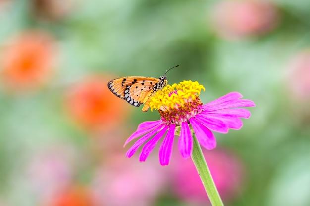 Beau papillon avec fleur et arrière-plan flou Photo Premium