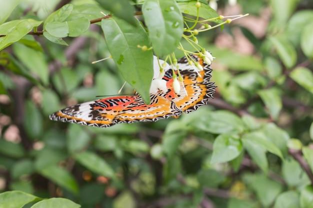 Beau papillon sur une fleur blanche flou ou flou flou Photo Premium