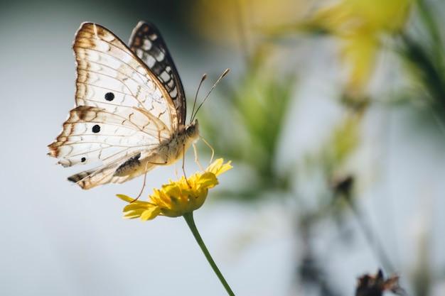 Beau papillon sur pissenlit Photo gratuit