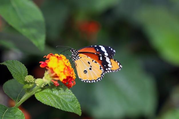 Beau Papillon Tropical Sur Fond De Nature Floue Photo Premium