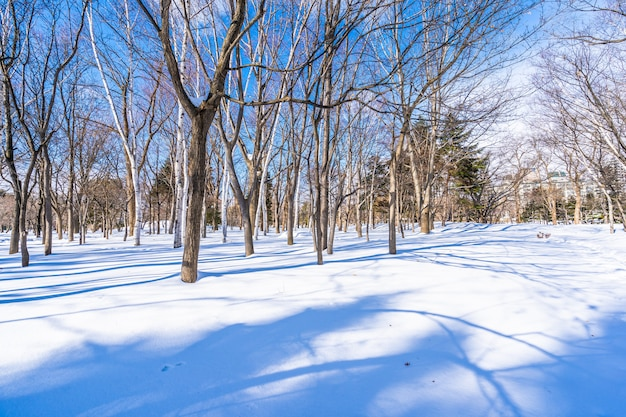 Beau paysage avec arbre en neige saison d'hiver Photo gratuit
