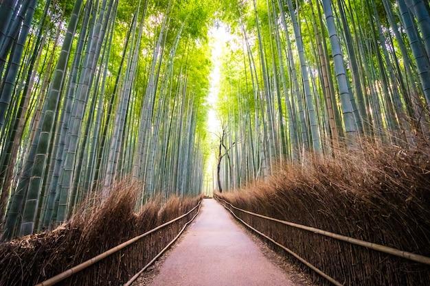 Beau paysage de bambouseraie dans la forêt d'arashiyama kyoto Photo gratuit