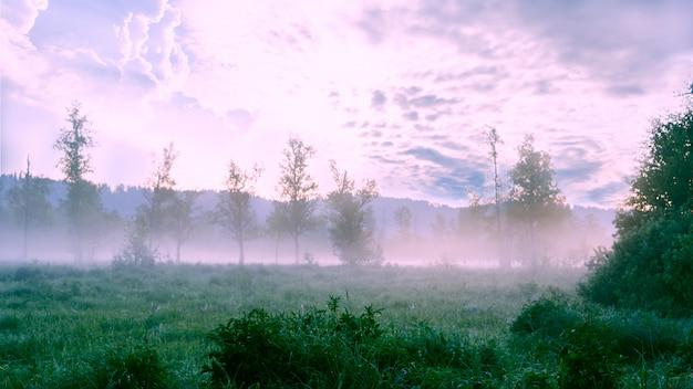 Beau paysage avec brume de l'aube et rosée du matin Photo Premium