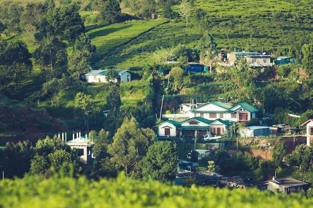 Beau paysage de ceylan. plantations de thé et maisons anciennes Photo Premium
