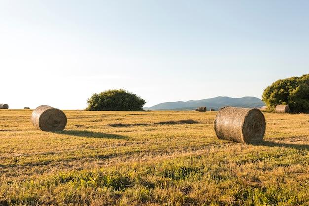 Beau paysage avec champ séché Photo gratuit