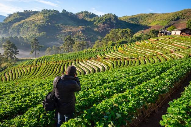 Beau paysage de la ferme aux fraises ban no lae avec une mer de brume, un arbre vert, une montagne bleue et un rayon de soleil le matin à doi ang khang, chiang mai, thaïlande Photo Premium