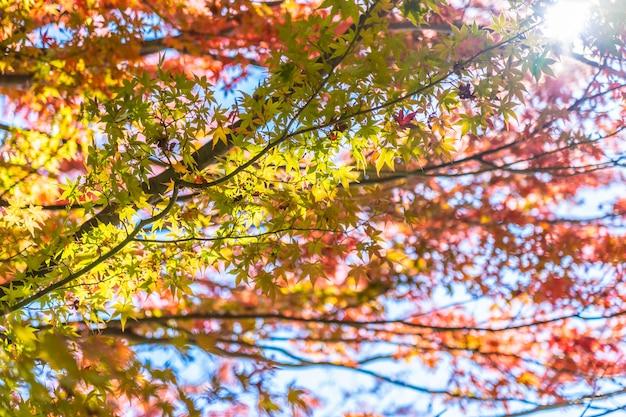 Beau paysage avec feuille d'érable en automne Photo gratuit