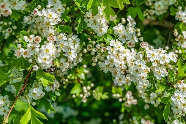 Beau Paysage De Fleurs De Cerisier Blanches Dans Un Champ Pendant La Journée Photo gratuit