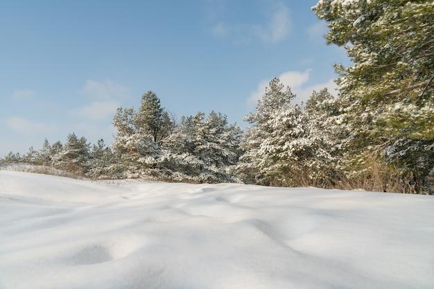 Beau Paysage D'hiver Avec Des Arbres Couverts De Neige Photo Premium
