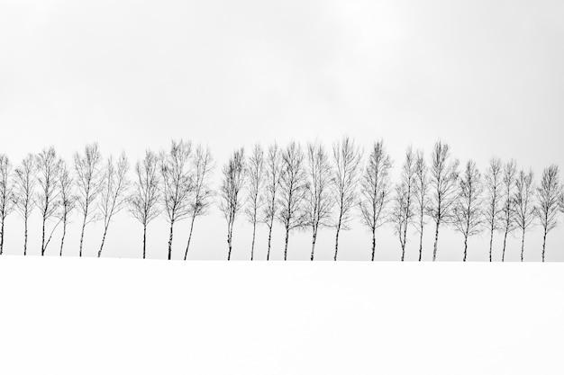 Beau Paysage De Plein Air Avec Un Groupe De Branches D'arbres En Hiver Photo gratuit