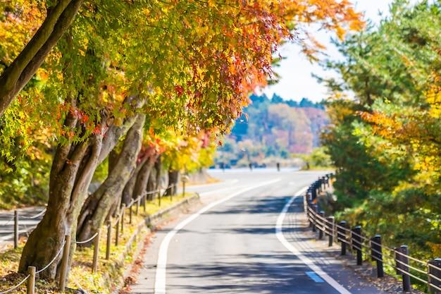 Beau Paysage De Route Dans La Forêt Avec érable Photo gratuit