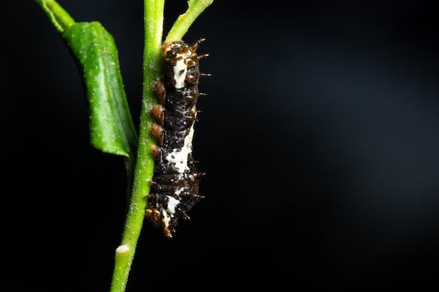 Beau ver de macro sur la plante Photo Premium