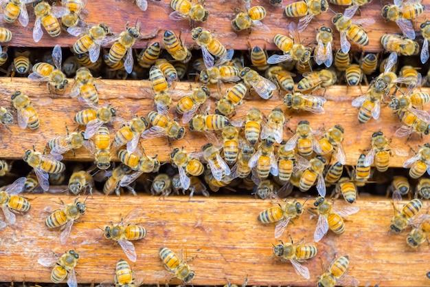 Beaucoup d'abeilles sur fond de nid d'abeille Photo Premium