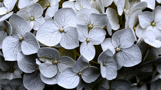 Beaucoup De Belles Fleurs D'alto à Pétales Blancs Photo gratuit