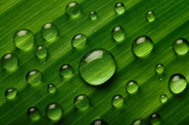 Beaucoup de gouttes d'eau tombent sur des feuilles de bananier Photo gratuit