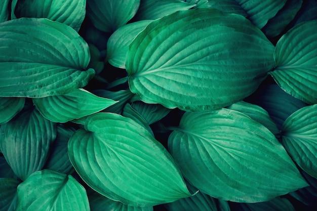 Beaucoup de grandes feuilles vertes. Photo Premium