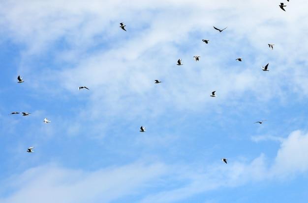 Beaucoup de mouettes blanches volent dans le ciel bleu nuageux Photo Premium