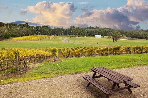 Beauriful Vineyard Dans La Vallée De Yarra, Australie En Automne Photo Premium