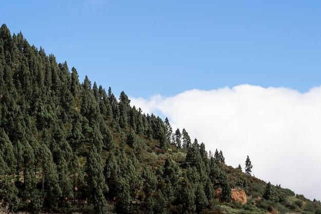 Beaux arbres au-dessus des nuages Photo gratuit