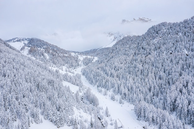 Beaux Arbres Dans Un Paysage D'hiver Tôt Le Matin Dans Les Chutes De Neige Photo gratuit