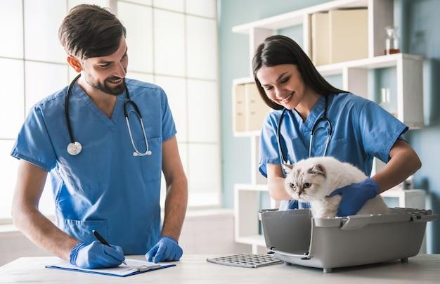 De beaux jeunes vétérinaires examinent un chat mignon. Photo Premium