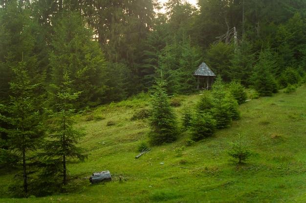 Beaux Pins Sur Les Montagnes Photo gratuit