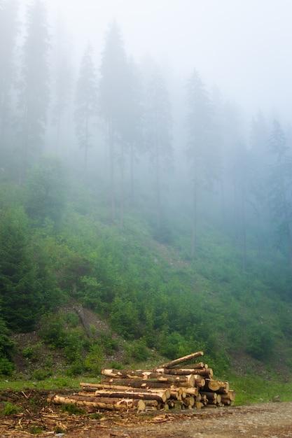Beaux Pins Verts Dans Le Brouillard Sur Les Montagnes Des Carpates En Ukraine. Photo gratuit