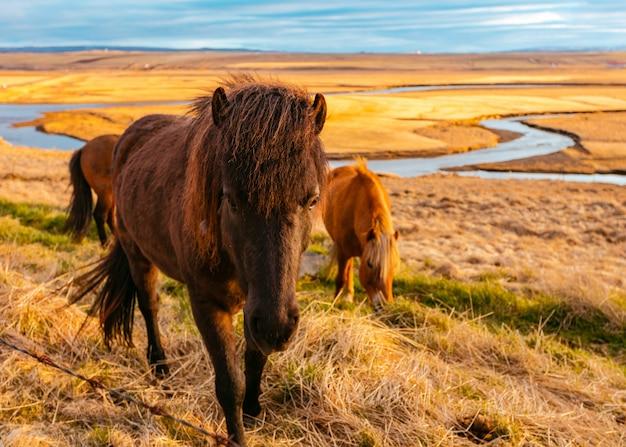 Beaux Poneys Sauvages Dans Le Domaine Photo gratuit