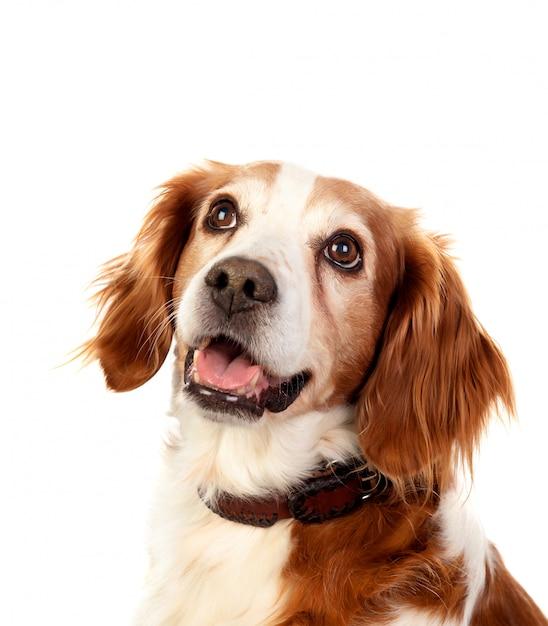 Beaux portraits d'un chien Photo Premium